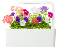 Click and Grow petunia